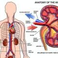 Ugonjwa sugu wa figo (Chronic Kidney Disease)